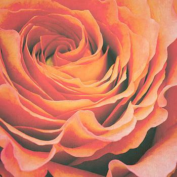 Angela Doelling AD DESIGN Photo and PhotoArt - Le petale de rose