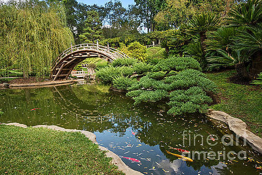 Jamie Pham - Lead the Way - The beautiful Japanese Gardens at the Huntington Library with Koi swimming.