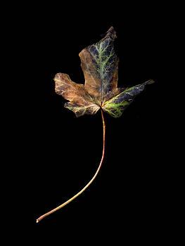 Leaf 1 by David J Bookbinder