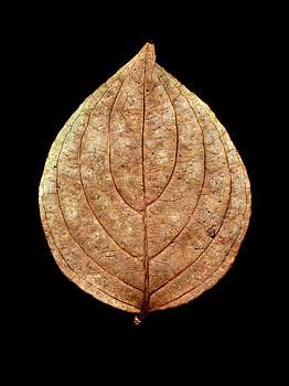 Leaf 12 by David J Bookbinder