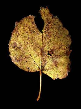 Leaf 13 by David J Bookbinder