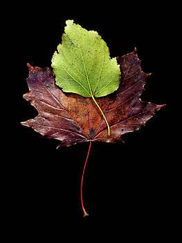 Leaf 15 by David J Bookbinder
