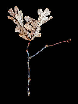 Leaf 23 by David J Bookbinder