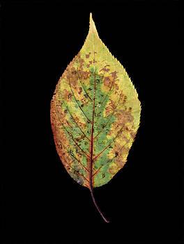 Leaf 5 by David J Bookbinder