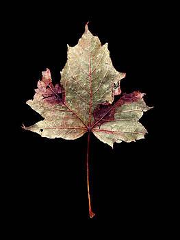 Leaf 7 by David J Bookbinder
