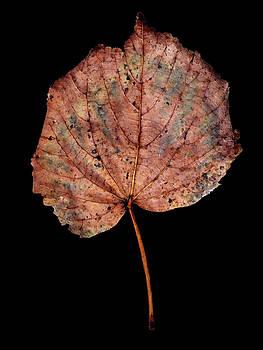 Leaf 8 by David J Bookbinder