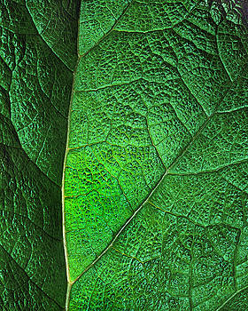Leaf Abstract by Art Shimamura