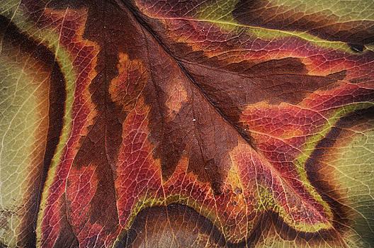 Leaf Abstract by David Kocherhans