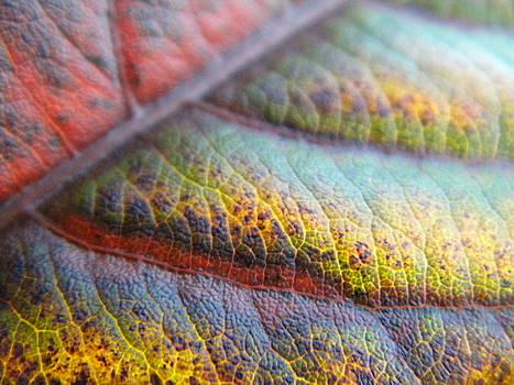 Leaf  by Alyona Firth
