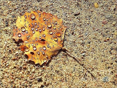 Leaf and Dew by Jessica Wood