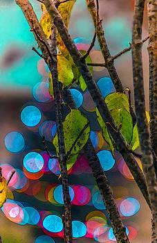 Leaf and Light by Abbie Loyd Kern
