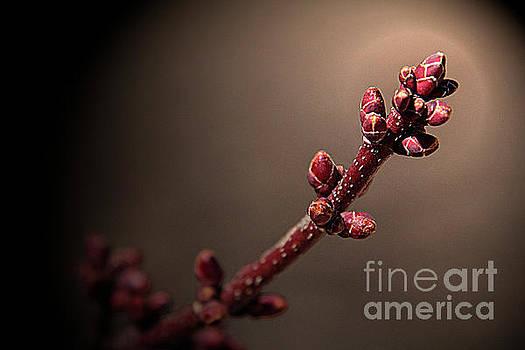 Leaf buds by Jim Wright
