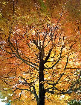 Leaf Change by John Rowe