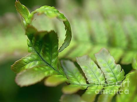 Leaf curl by Gillian Singleton
