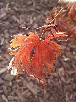 Leaf Dancing by Karen Renee