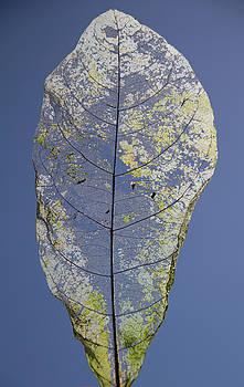 Leaf by Debbie Cundy