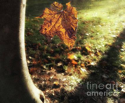 Leaf Fall  by Steven Digman