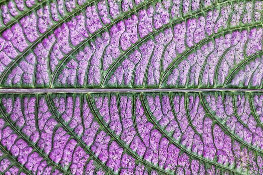 Leaf Highway by Georgette Grossman