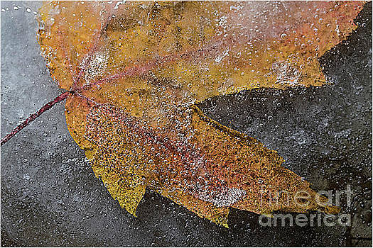 Leaf in ice 3 by Jim Wright
