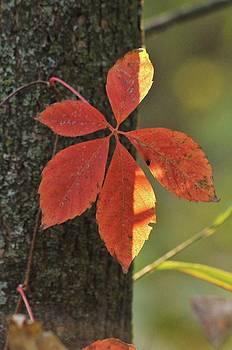 Leaf in Shadow by Jennifer Englehardt