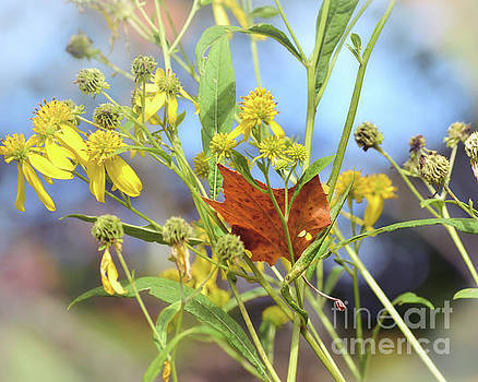 Leaf in the Wildflowers by Kerri Farley