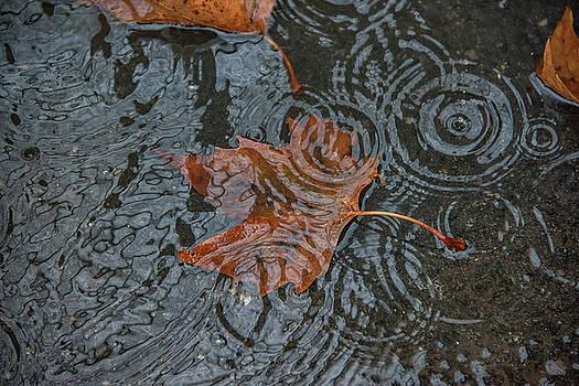 Leaf in Water Drops  by Dennis Clark