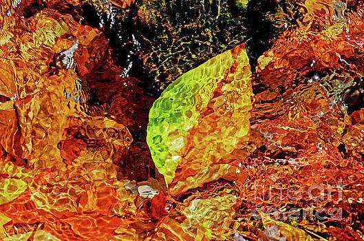 Leaf In Water by Paul Mashburn