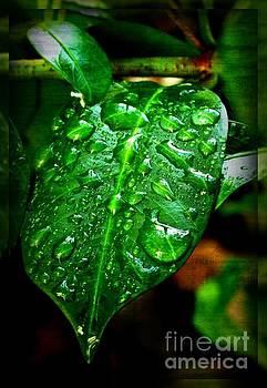 Leaf by Leslie Revels