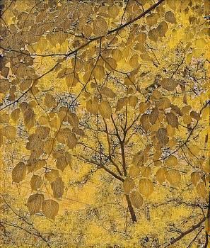 Leaf Me 5 by Devorah Malek
