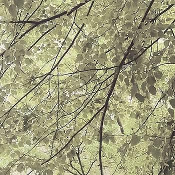 Leaf You 1 by Devorah Malek