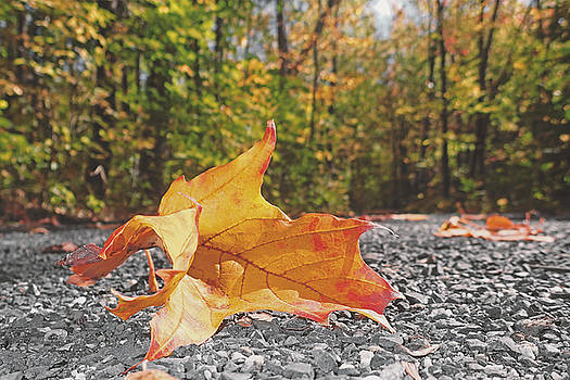 Leaf of autumn forest by Asbed Iskedjian