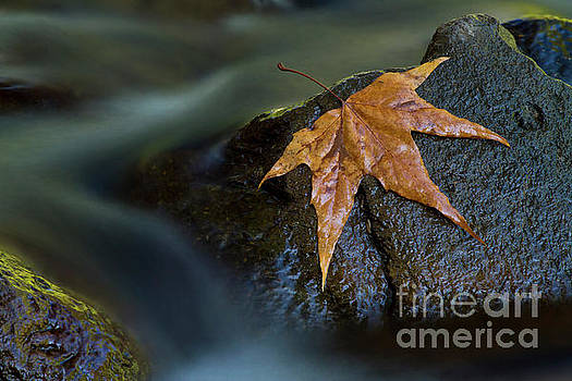 Leaf on a rock by Bryan Keil
