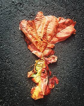 Leaf on asphalt by Olivier Calas