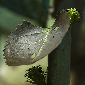 Leaf on Cactus Plant by Billy Stovall