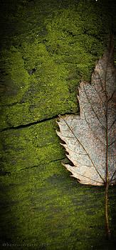 Leaf On Green Wood by Henri Irizarri