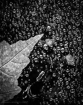 Leaf On Raindrops by Henri Irizarri