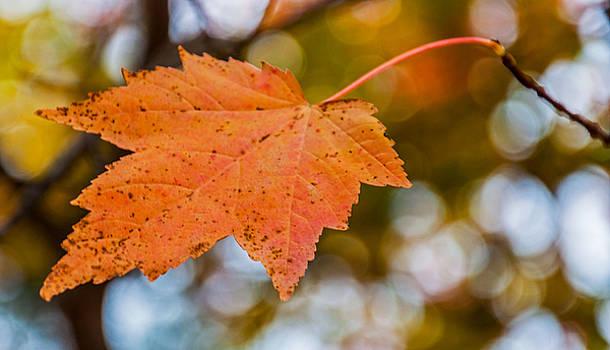 Leaf On Tree by Lonnie Paulson