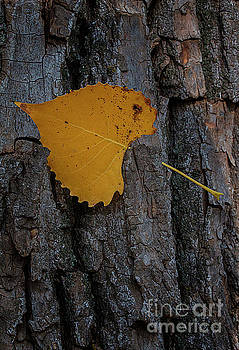 Leaf on trunk by Jim Wright
