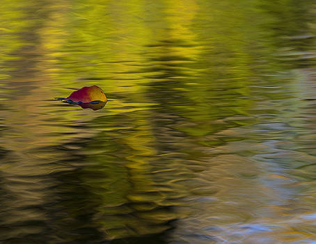Leaf on Water 2 by Billy Stovall
