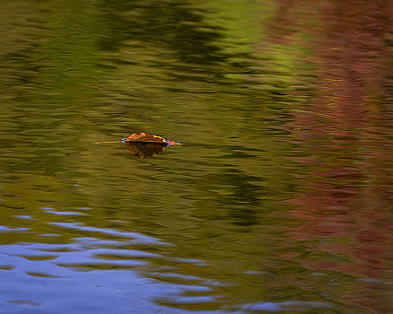 Leaf on Water by Billy Stovall