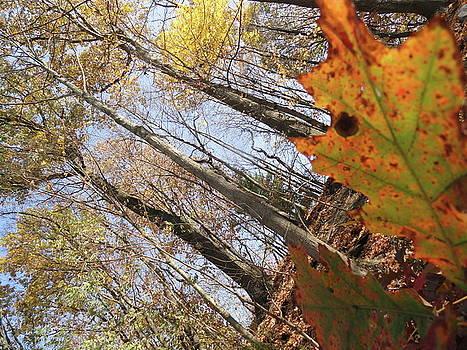 Leaf Peepers by Trish Hale
