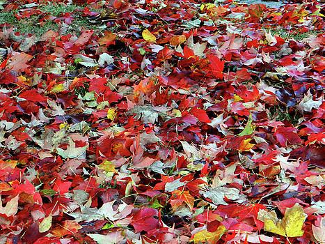 Leaf Pile by Jamie Johnson