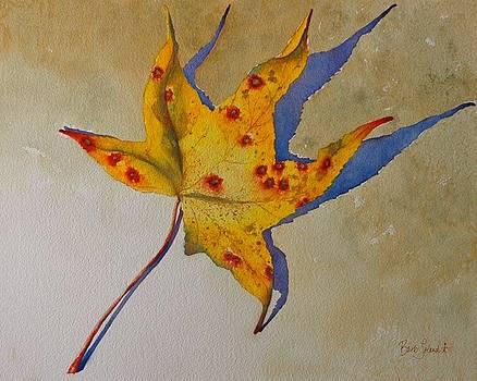 Leaf Shadow by Barb Toland
