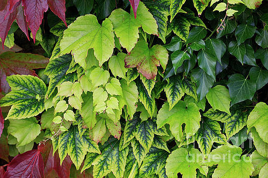 Leaf Shapes by Tracy Hall