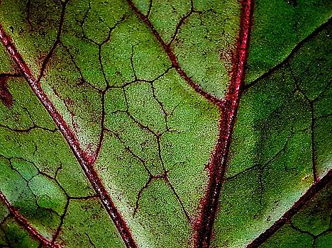Colin Drysdale - Leaf Veins