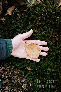 Leaf by Viktor Pravdica