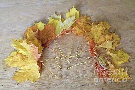 Leaf Wreath by Tracy Hall