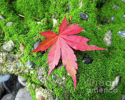 Leaf Zen by Katrina Perekrestenko