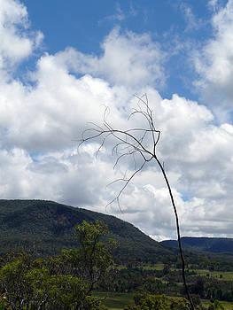 Leafless by Elizabeth McPhee