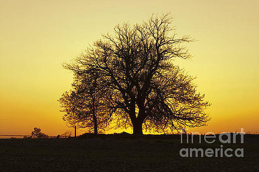Leafless Tree Against Sunset Sky by Sharon Foelz